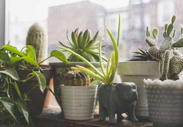 The Benefits of Indoor Plants Within Your Room